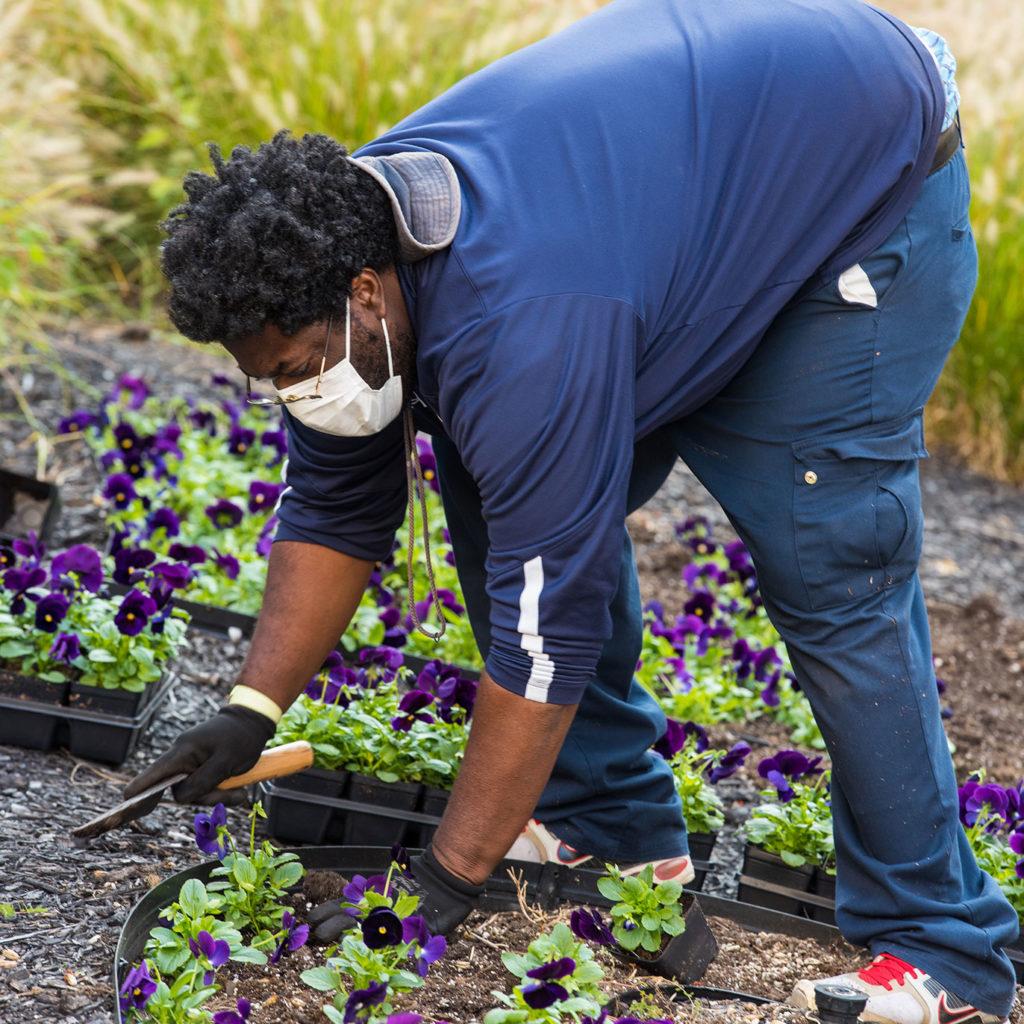 Black man planting flowers in public green space.